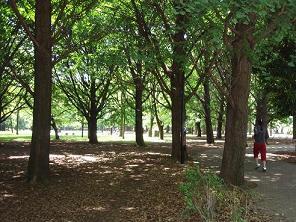 芦花公園4