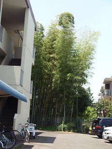 粕谷の竹林2
