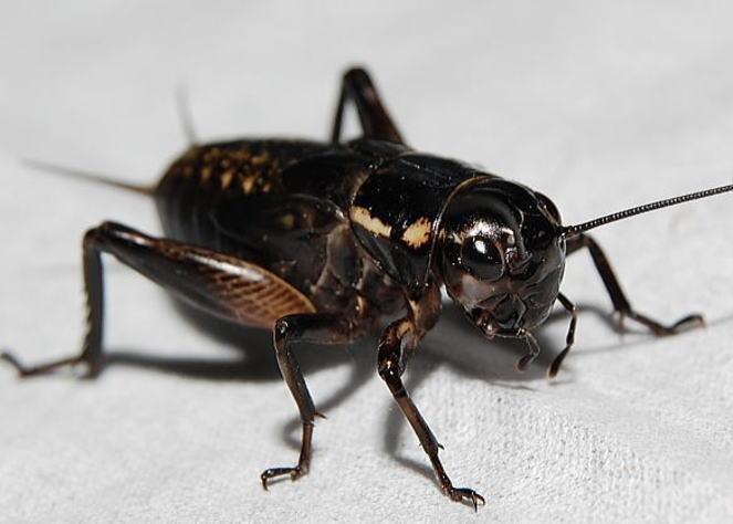NAVER まとめゴキブリが嫌いな人のための11個の決定的な対策!