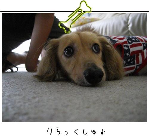 5_20100731123746.jpg
