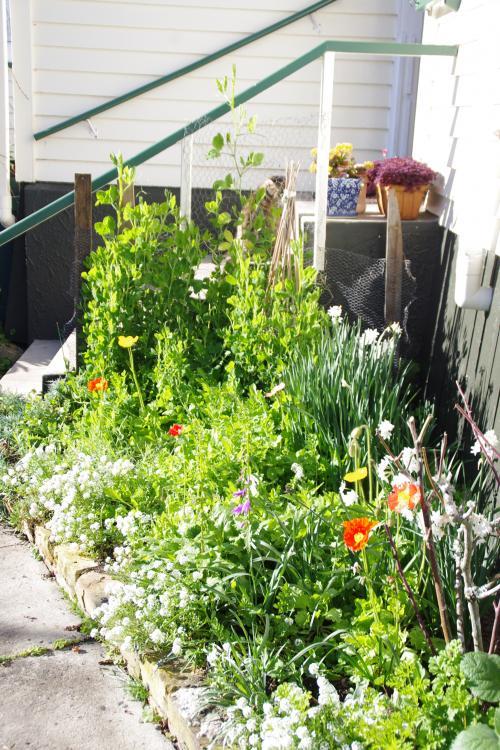 裏庭の寄植