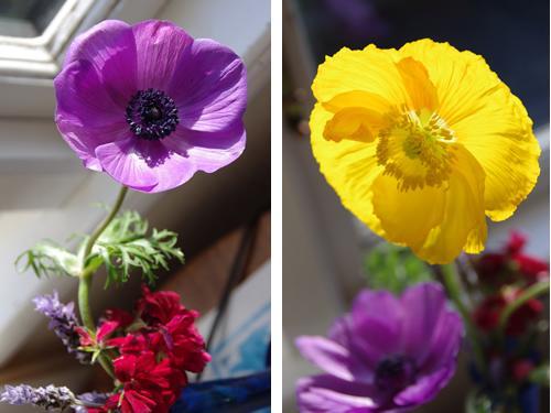 紫と黄色のポピー