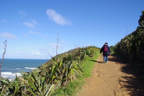 NZカツオドリの群生地へ