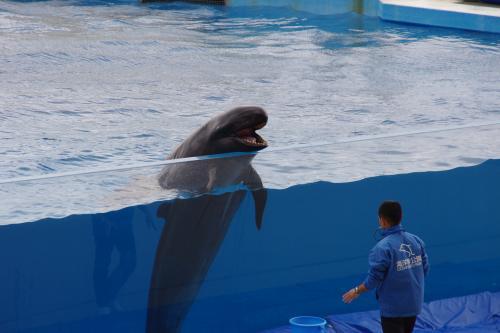おきちゃん劇場のクジラ