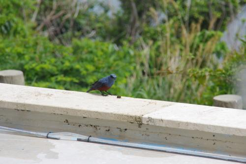 浜比嘉リゾートの鳥