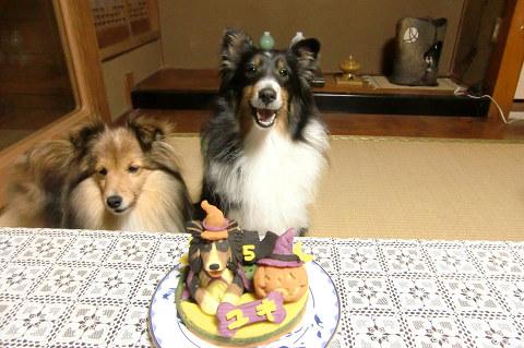 祝5歳☆ユキ