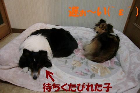 ユキ&凛のペア