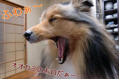 オオカミのお口だぁー