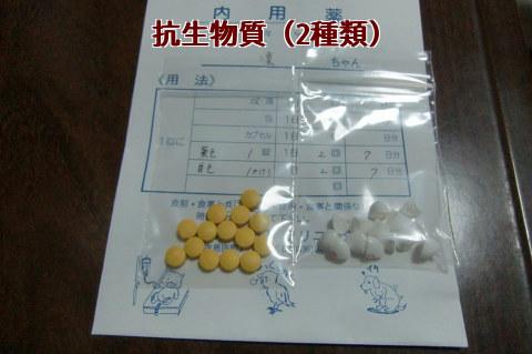 抗生物質(2種類)