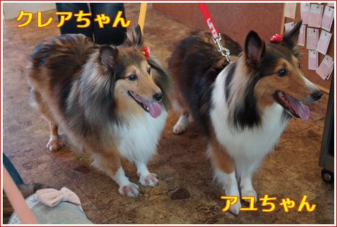 クレア&アユちゃん