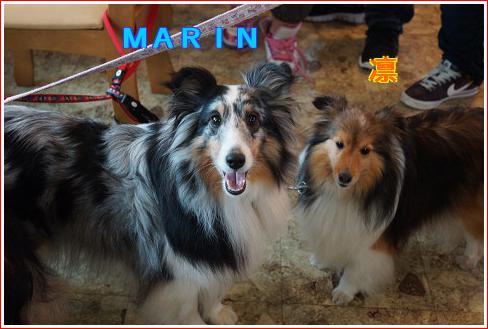 MARIN&凛