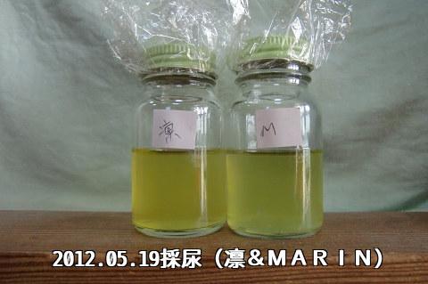 2012.05.19採尿(凛&MARIN)