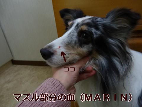 マズル部分の血(MARIN)