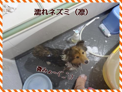 20121123 濡れネズミ