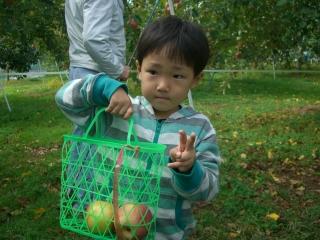 リンゴ狩り6