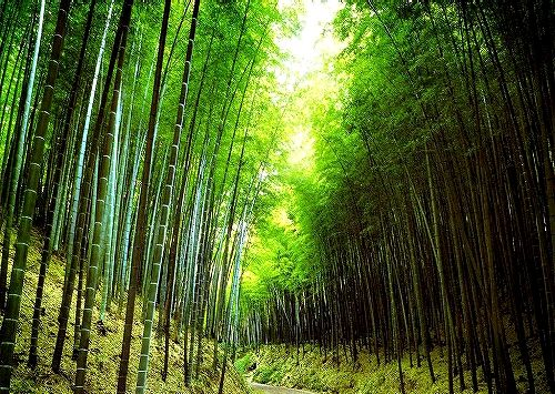 1162222363_1024x768_green-bamboo-roads-_20110429222259.jpg