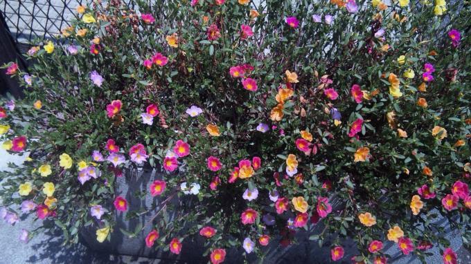 淋しそうな花たち
