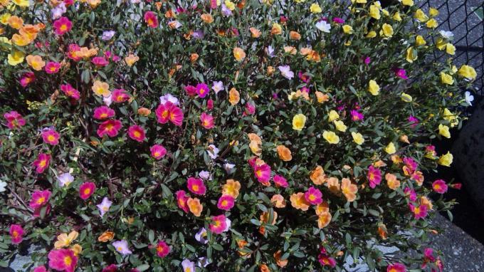 花たち_20100807