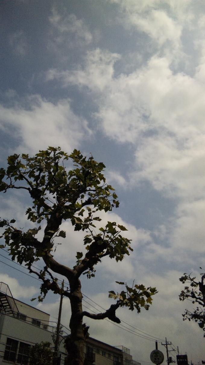 Sky_20100819