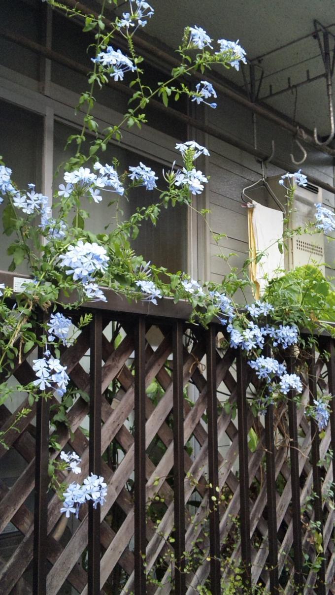 Flower_20100820