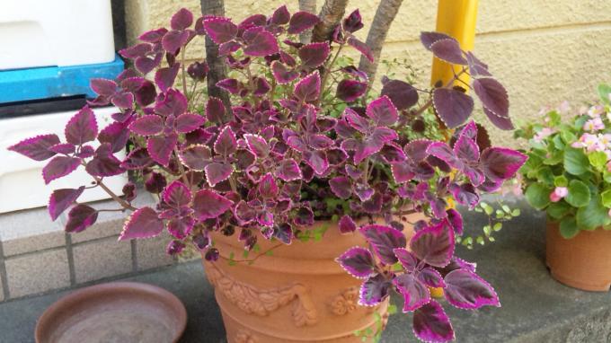 Flower_20100824