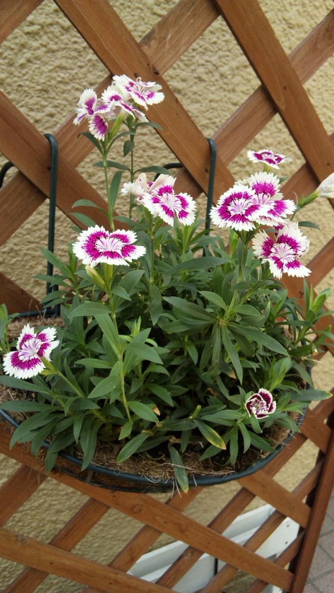 Flower_20100825