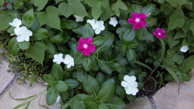 Flower_20100827