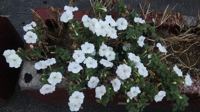 Flower_20100828