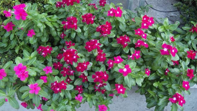 Flower_20100913