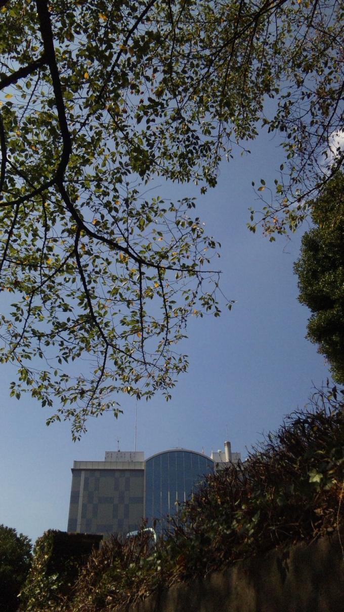 木陰_20100914