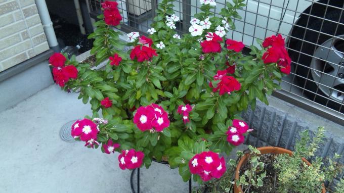 Flower_20100914