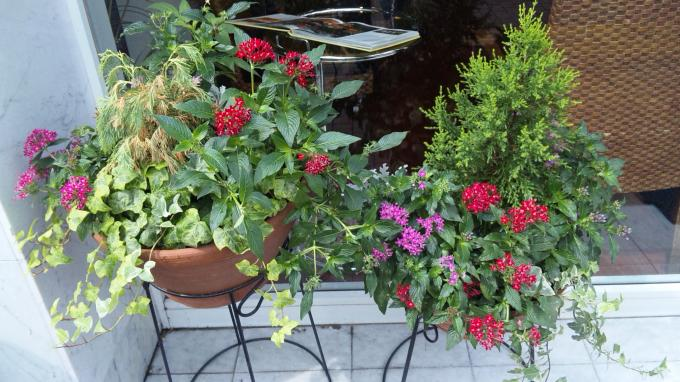 Flowers_20100915