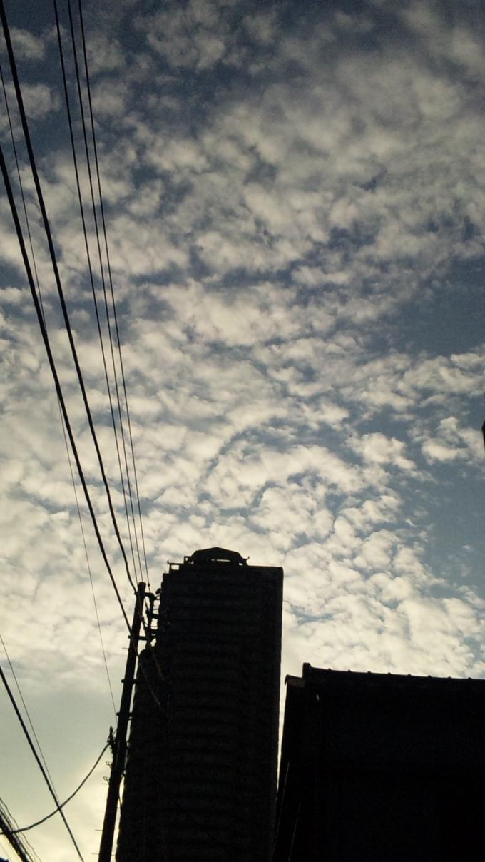 鱗雲_20100917