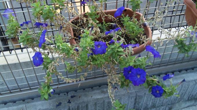 Flower_20100918