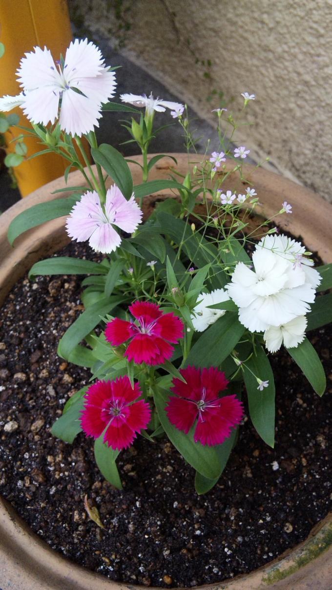 Flowers_20100920