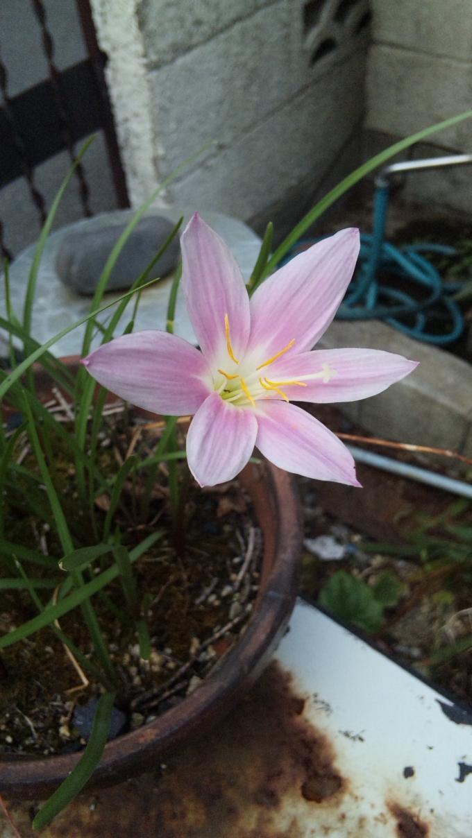 Flower_20100921