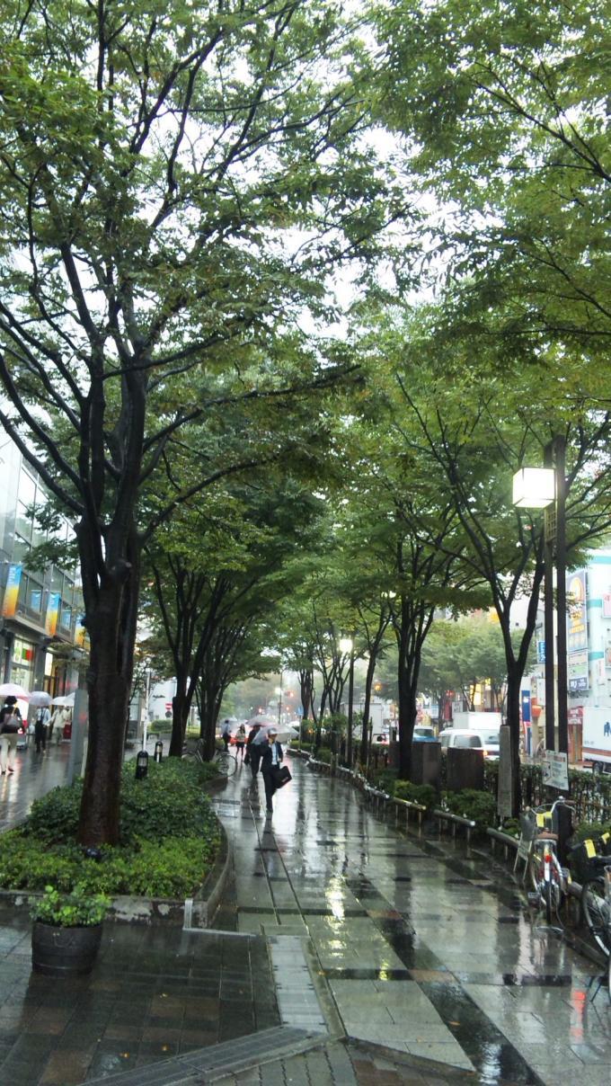 雨の並木道_20100928