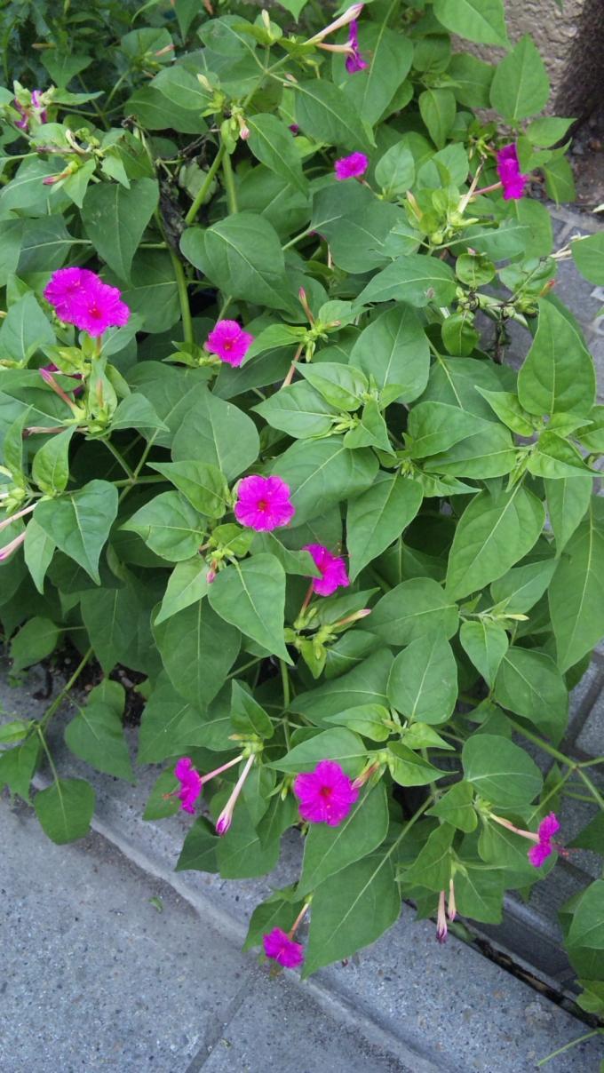 Flower_20100930