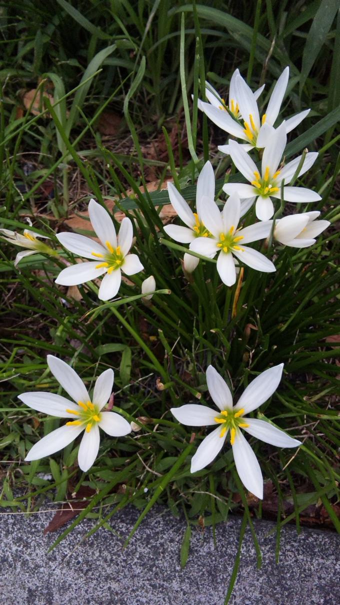 Flower_20101001