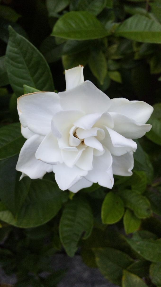 Flower_20101003