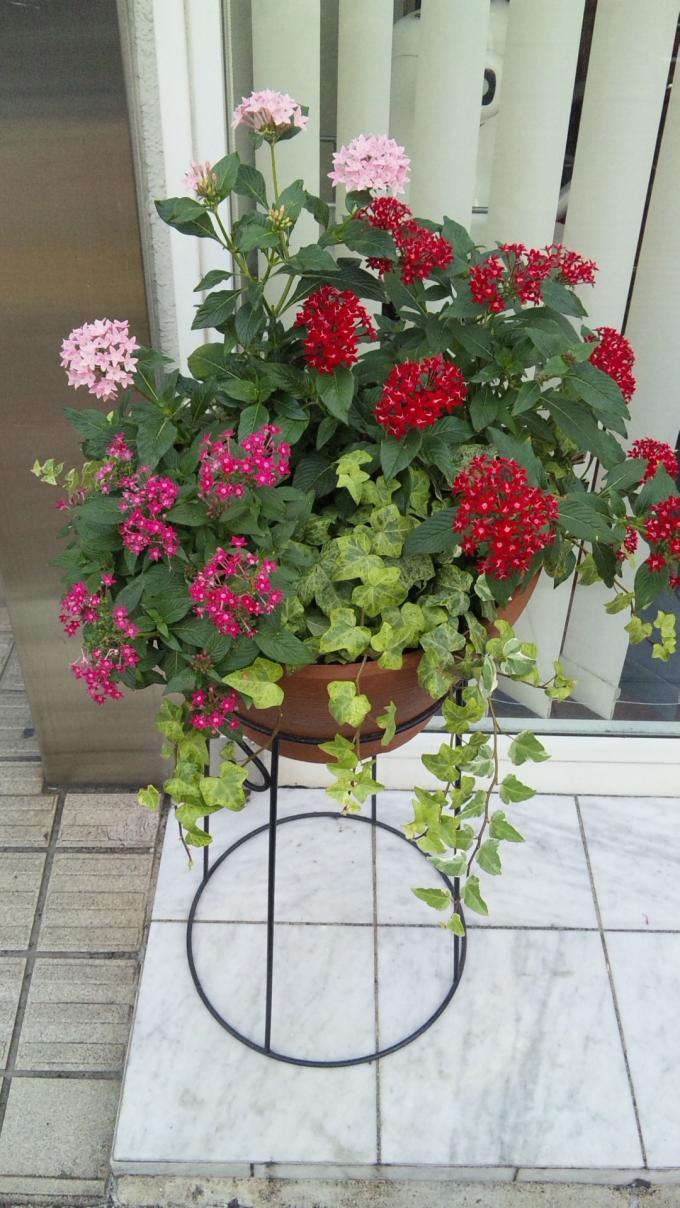 Flowers_20101008