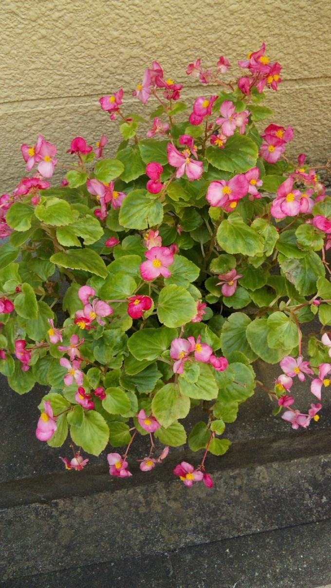 Flower_20101112