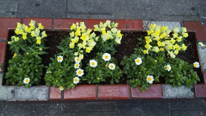 Flowers_20101112