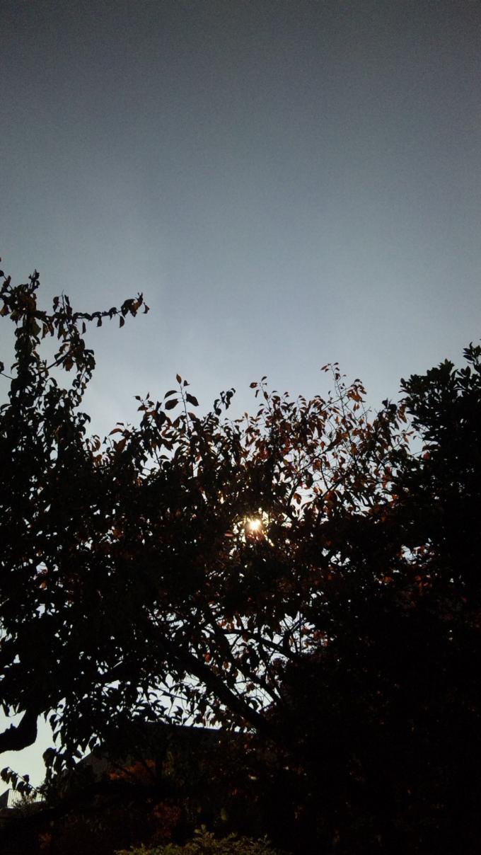 SUN_20101127