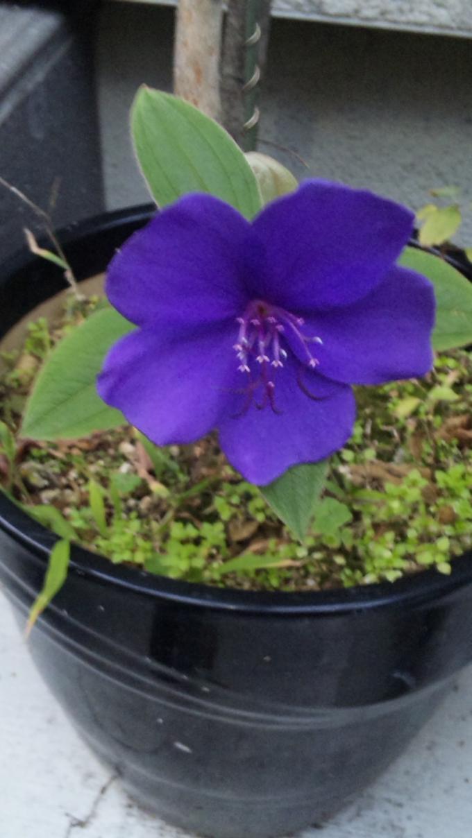 Flower_20101202