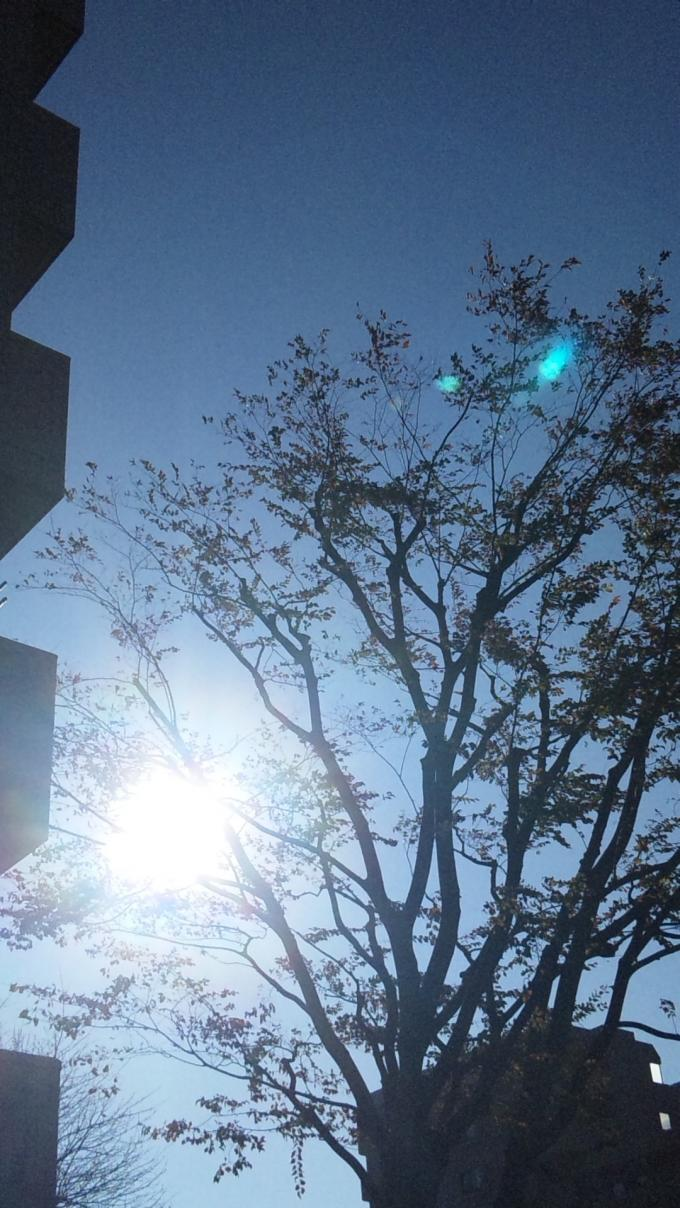 SUN  SHINE_20101203