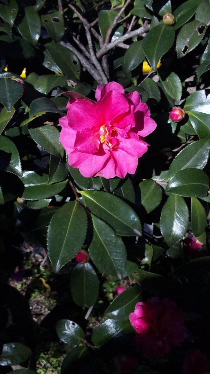 Flower_20101204