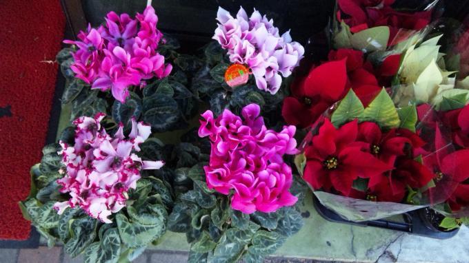 Flowers_20101204