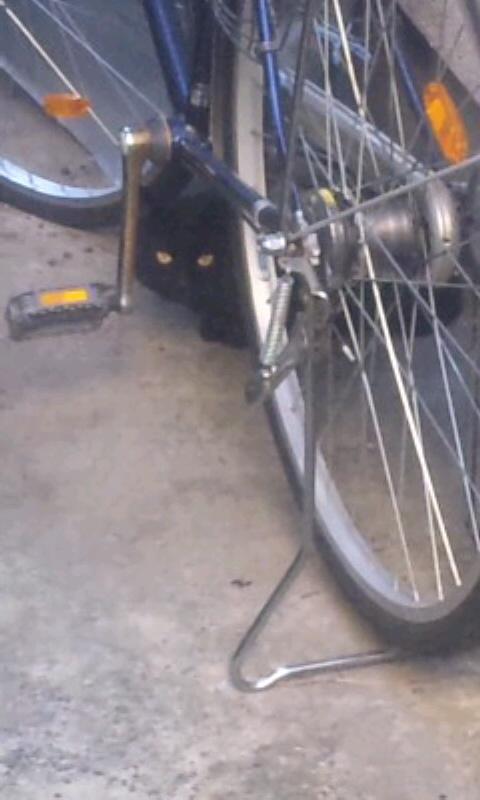 黒猫_20101209