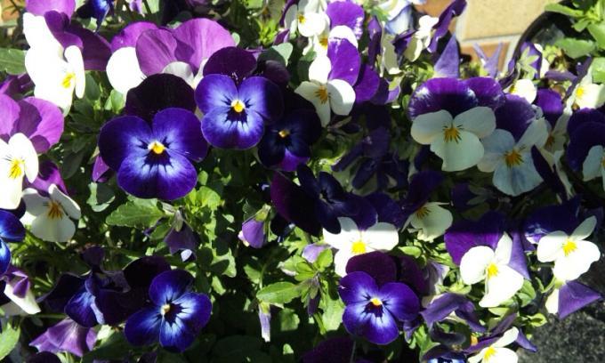 Flowers_20120316